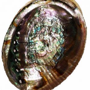abalone shell pink